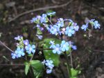 Spring flowers by UdoChristmann