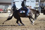 DWP FREE HORSE STOCK 120 by DancesWithPonies