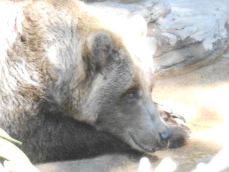 pensive grizzly by insanemouse