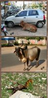 animals on the street in India by gosiekd