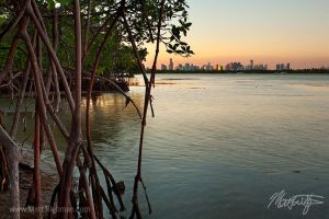 Miami and Mangroves by MattTilghman