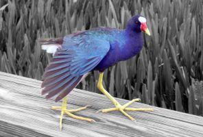 Selective Color by flowerhippie22