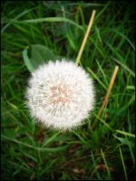 the blowball by Summer-Sunny