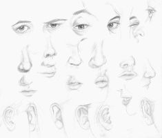 Eyes, Nose, Mouth, Ear study by JaDisArt