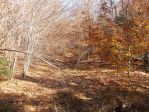 Old Logging Trail in the Fall by TheGreatWiseAss