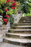 Steps Left and Red Rhododendrons by MayEbony