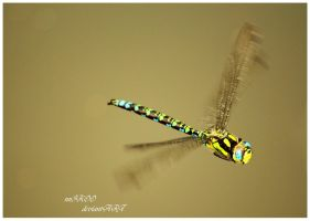 Dragonfly by nnIKOO