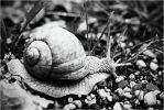 snail by Strange-Illusions