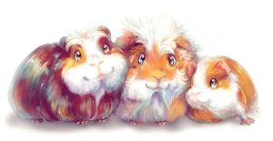 My Little Guinea Pigs by Fany001