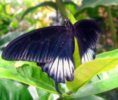 Butterfly by Amf624