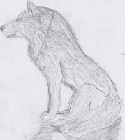 grey wolf by k-9girl