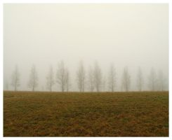 expressionles trees by FrenulumKu