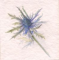 Blue Thistle by dixiekasilke