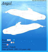 Angel by Oreo-The-Orca12