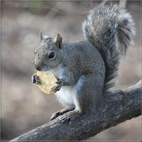 Squirrels Prefer Ritz by SalemCat