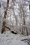 Winter Forest Stock 22 by AreteStock