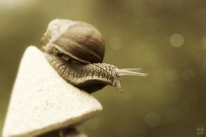 Another snail ... by Brigitte-Fredensborg