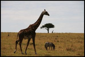 This is Africa 2... by sxy447