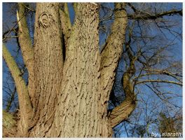 Thick branches by Miarath