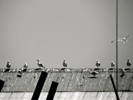 Seagulls by Michayla-Marie