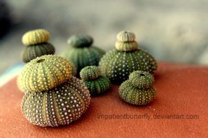 Little sea urchins by ImpatientButterfly