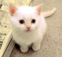 cutiekitty by wolflover139