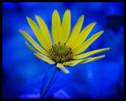 The Flower 4 by Mihaell