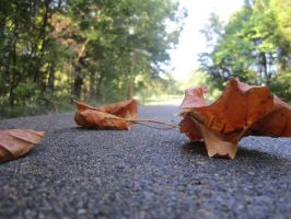 leaves on the road by oreolovers77