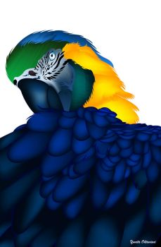 Blue And Gold Macaw by itaocta