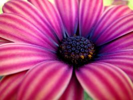 Flower Power by Liburnica