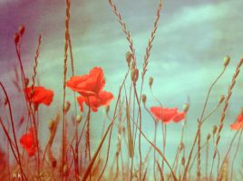 Poppies heaven 2 by Natsza