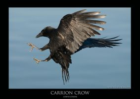 CORVUS.7 by THEDOC4