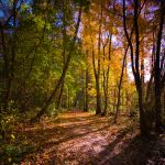 Autumn's here by CalleHoglund