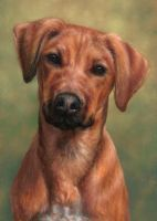 Young Ridgeback by Keraani