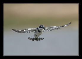 Hover by invisiblewl