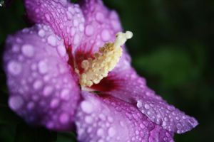 After the Rain by Kibounotane
