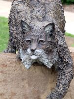 Bobcat Face On by MorganCG