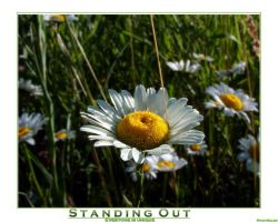 Standing Out by Tantas