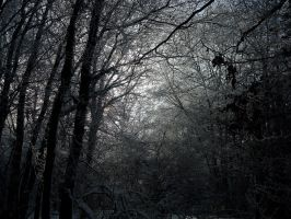 Winter Darkness by Risen-From-The-Ruins