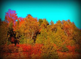Fall Mixed Colours by surrealistic-gloom