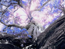 Purple version of tree by Button-the-random