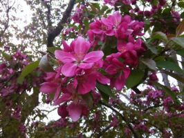 Pink Flowers 10 by Chellie6959