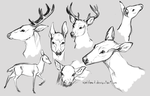 Deer studies #1 by IceIsland