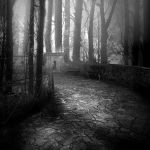 Premade BG Night in the Forest by E-DinaPhotoArt