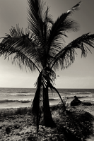 Honeymoon Island I by mgt1968