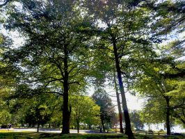 August Park by GUDRUN355