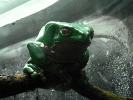 Lazy Frog by A-New-Lesson