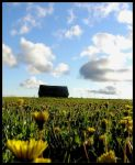 The colors of a sunny field by PeligroInevitable