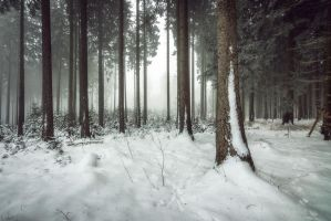 Winter Forest by artmobe