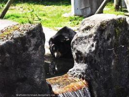 Belfast Zoo-Bear by GrafixGirlIreland